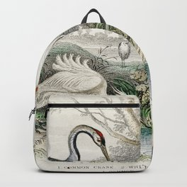 Common Crane White Stork Gigantic Crane Common Heron and Little Egret from A history of the earth an Backpack