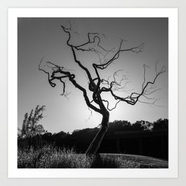 Gothic Twisted Tree - Black and White Art Print