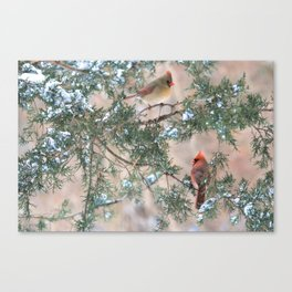 Winter Pair: Cardinals Canvas Print
