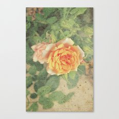 A rose in it's prime Canvas Print