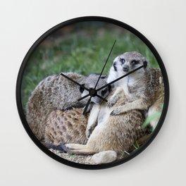 meerkats in the savannah Wall Clock