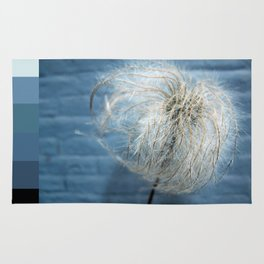Clematis Alpina Seed head on blue Rug