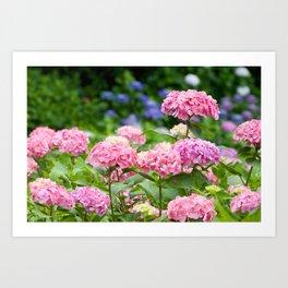 Pink & Lavender Flower Clusters Art Print