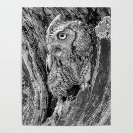 Echo the Screech Owl by Teresa Thompson Poster