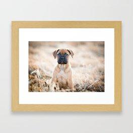 Bullmastiff Puppy Framed Art Print