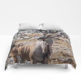 Kudu 2 Comforters
