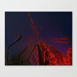 Corn and Sun Canvas Print