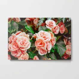 FLOWERS - FLORA - PETALS - BLOSSOMS - BEAUTIFUL Metal Print
