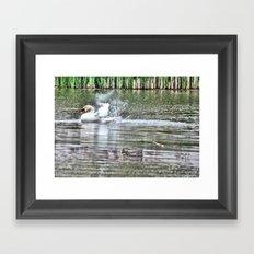 bathing swan Framed Art Print