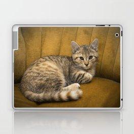 Cinnamon Tabby Kitten Laptop & iPad Skin