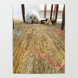 Doodle Dog Under the Table Poster