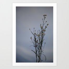 Autumn-Dandelion Art Print