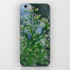 Mini Dandelions iPhone & iPod Skin