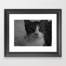 CAT. Framed Art Print