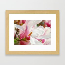 Magnolia 143 Framed Art Print