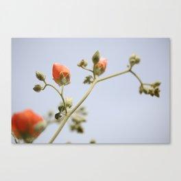 Orange & Blue & Green (Super Bloom) Canvas Print