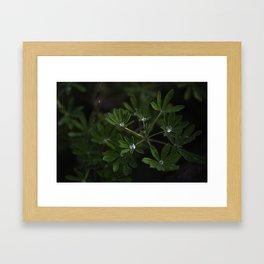 Water in Leaves Framed Art Print
