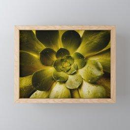 Details in the Succulent Framed Mini Art Print
