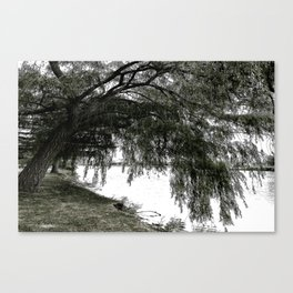 Weeping Willow on the Water Canvas Print
