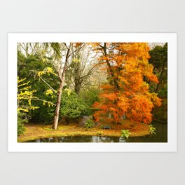 Willow in Autumn colors Art Print