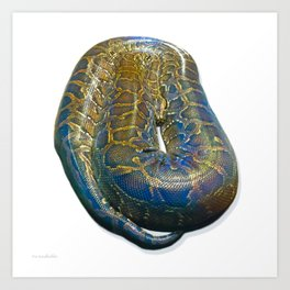 Snakes: Reticulated Python Art Print