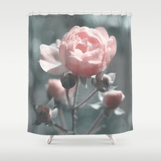 Romantic rose at Backlight- roses Shower Curtain