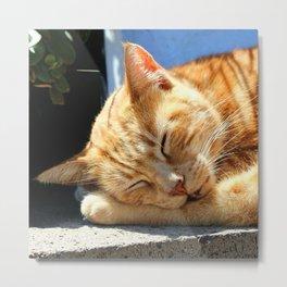 Sleeping cat Metal Print