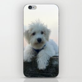 Teddy At Sunset iPhone Skin