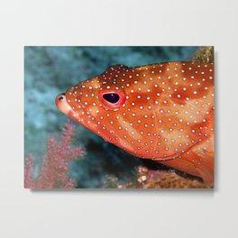 Coral Cod's Head Metal Print