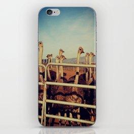 Ostrich Farm iPhone Skin