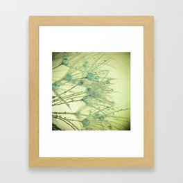 Dandelion Water Drop Macro 11 Framed Art Print