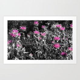The Pinks and the Greys Art Print