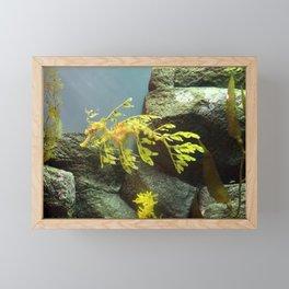 Leafy Sea Dragon with Rocks Framed Mini Art Print