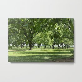 Peach and Pecan Orchard Metal Print