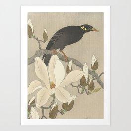 Myna on Magnolia Branch Art Print