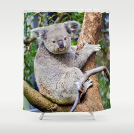 Australian Koala Bear Photo Shower Curtain