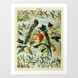 """Adolphe Millot """"Oiseaux"""" Tropical Birds Nouveau Larousse 1905 Art Print"""