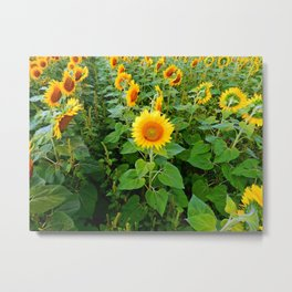 Look the Other Way Metal Print