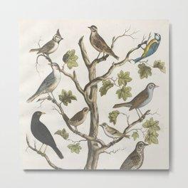 Vintage Naturalist Birds Metal Print