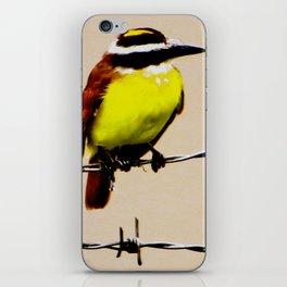 Kiskadee iPhone Skin