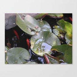 koi, lily pad Canvas Print
