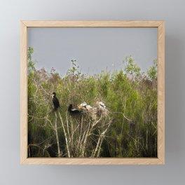 Anhinga Family Tree Framed Mini Art Print