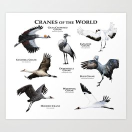 Cranes of the World Art Print