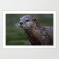 otter Art Prints featuring Otter by Mark Wheeler Photography
