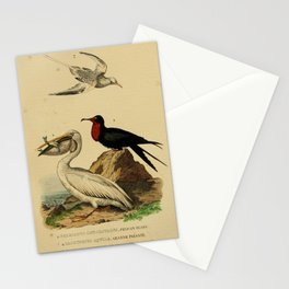 Great White Pelican tachypetes aquila phaeton phoenicurus13 Stationery Cards