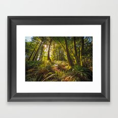 Redwood Regional Framed Art Print