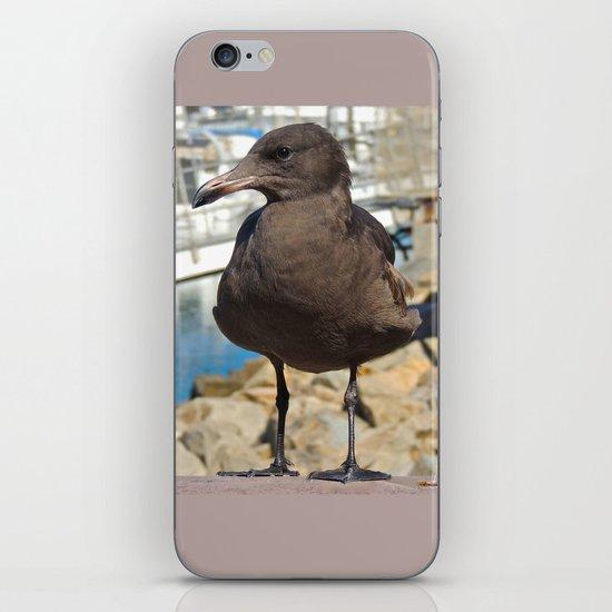 Portrait of a Grumpy Gull iPhone & iPod Skin