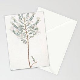 Flower 1268 pimelea humilis Lowly Pimelea13 Stationery Cards
