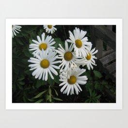 daisys 2 Art Print