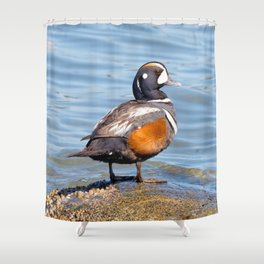 Beautiful Harlequin Duck on the Rocks Shower Curtain